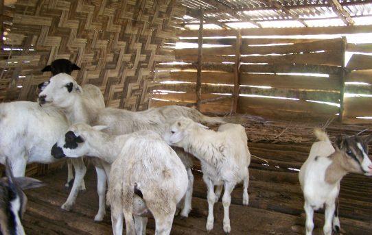 Agrar- und Viehzuchtprojekt in Rotifunk